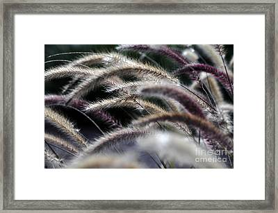 Fuzzy Framed Print by Clayton Bruster