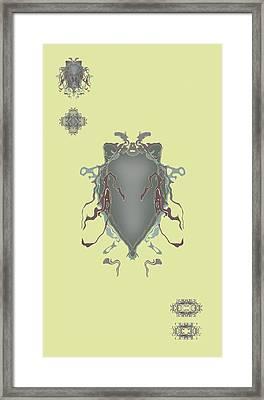 Fuzzy Eared Horsefly Specimen Framed Print