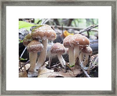 Framed Print featuring the photograph Fuzzy Fungi by Martha Ayotte