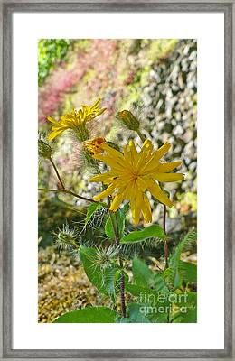 Fuzzy Framed Print by Larry Keahey