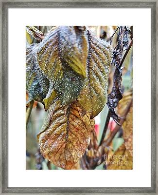 Fuzzy Leaf Abstract Framed Print