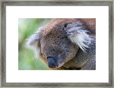 Fuzzy Framed Print by Mike  Dawson