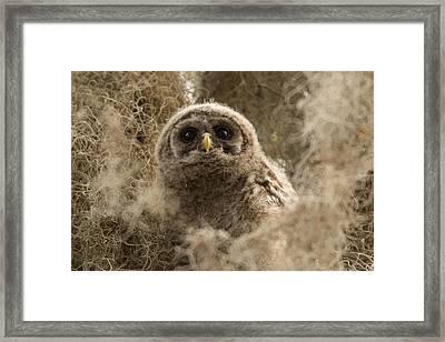 Fuzzy Framed Print by Sandy Sisti