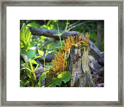 Framed Print featuring the photograph Fuzzy Stump by Bill Pevlor