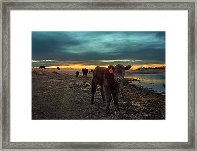 Fuzzy Framed Print by Thomas Zimmerman