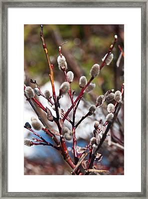 Fuzzy Wuzzy Framed Print by Bob and Nancy Kendrick