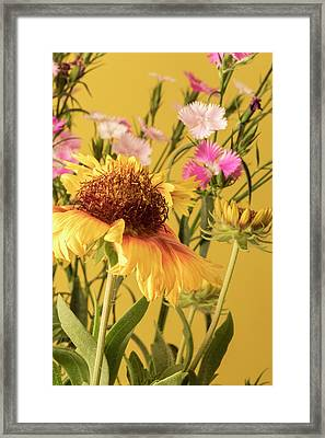 Framed Print featuring the photograph Gaillardia And Dianthus by Richard Rizzo