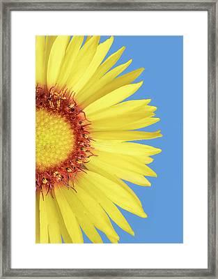 Gaillardia Aristata   Blanketflower Framed Print by Jim Hughes