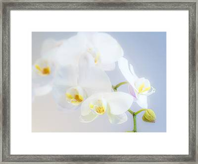 Gail's Orchids Framed Print
