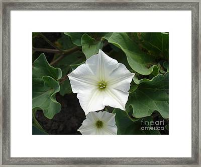 Galapagos Flower Framed Print by Chad Natti