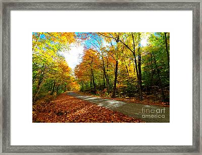 Gale River Road  Framed Print by Catherine Reusch Daley