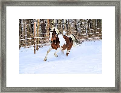 Galloping In The Snow Framed Print by Elizabeth Dow