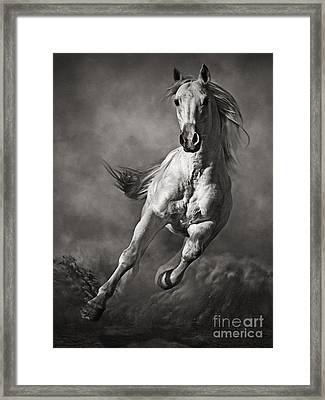 Galloping White Horse In Dust Framed Print