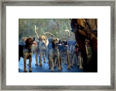 Galway Blazers, Co Galway, Ireland Framed Print by Sici
