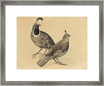 Gamble Quail Framed Print by Charles Christian Nahl