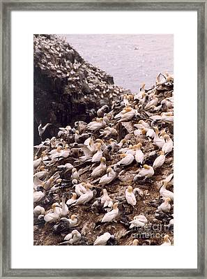 Framed Print featuring the photograph Gannet Cliffs by Mary Mikawoz