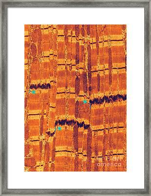 Gap Junctions, Lpm Framed Print