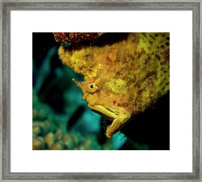 Gapping Frogfish Framed Print by Jean Noren