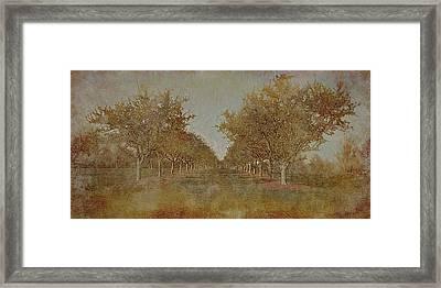 Garden 1 Framed Print by Inesa Kayuta