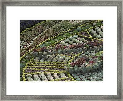 Garden 4 Framed Print