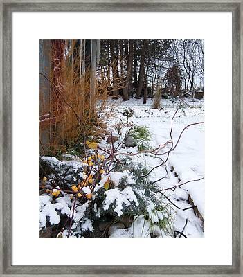 Garden 5 Framed Print