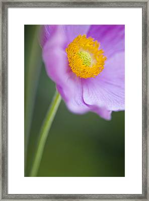 Garden Beauty Framed Print by Silke Magino
