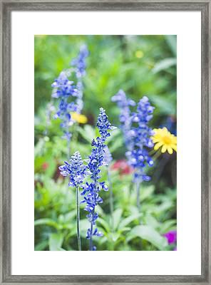 Garden Blues Framed Print by Christi Kraft