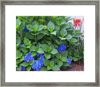 Garden Blues With A Touch Of Red Framed Print by Patricia Taylor
