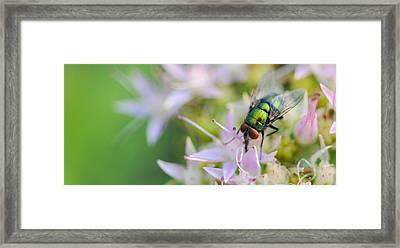 Garden Brunch Framed Print