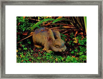 Garden Bunny Framed Print