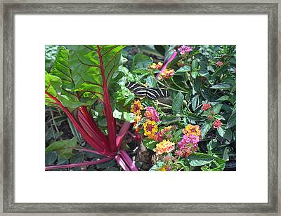 Garden Butterfly Framed Print by Aimee L Maher Photography and Art Visit ALMGallerydotcom