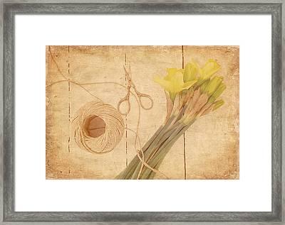 Garden Clippings - Daffodils Framed Print by Kim Hojnacki