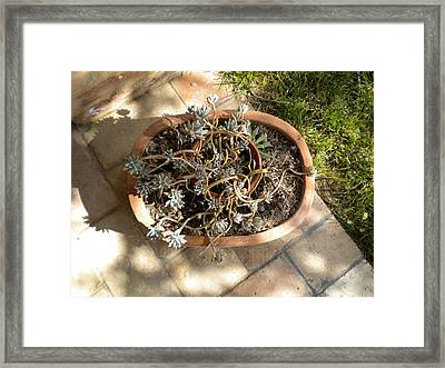Garden Composition Framed Print by Nancy Ferrier