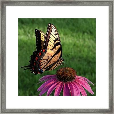 Garden Dancer Framed Print