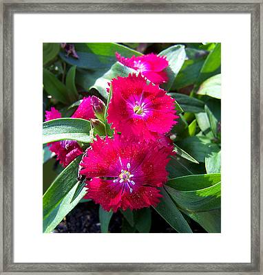 Framed Print featuring the photograph Garden Delight by Sandi OReilly