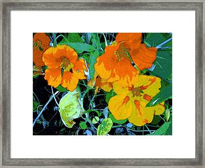 Garden Flavor Framed Print