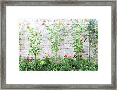 Framed Print featuring the photograph Garden Florals by Carolyn Dalessandro