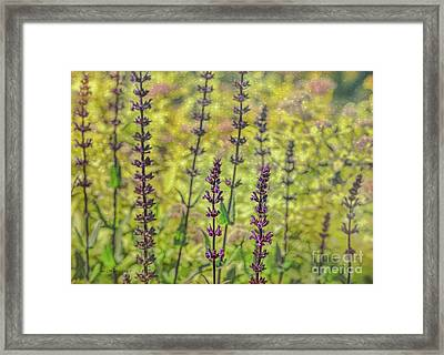 Garden Friends Framed Print by Jean OKeeffe Macro Abundance Art