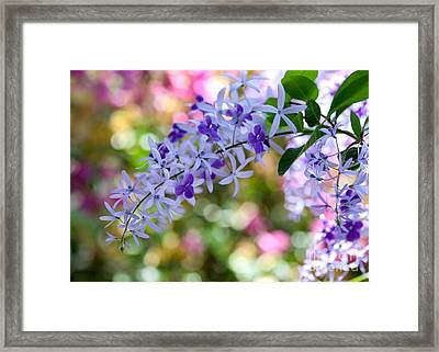 Garden Full Of Colors Framed Print