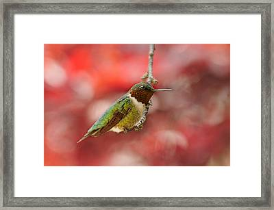 Framed Print featuring the photograph Garden Gem by Lara Ellis