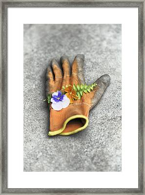 Garden Glove And Pansy Blossoms1 Framed Print