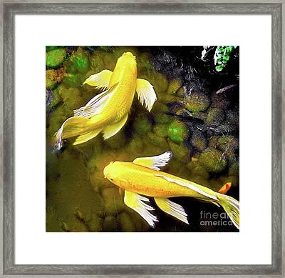 Garden Goldenfish Framed Print