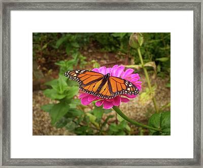 Garden Jewel  Framed Print