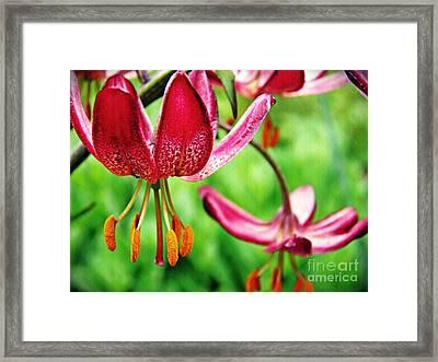 Garden Jewels 1 Framed Print by Sarah Loft
