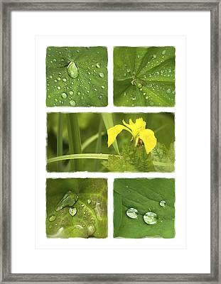 Garden Jewels II Framed Print