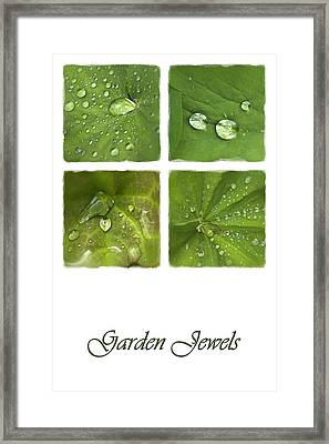 Garden Jewels Framed Print