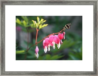 Garden Life Framed Print