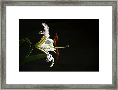 Framed Print featuring the photograph Garden Lily by Elsa Marie Santoro
