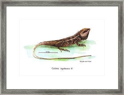 Garden Lizard Framed Print