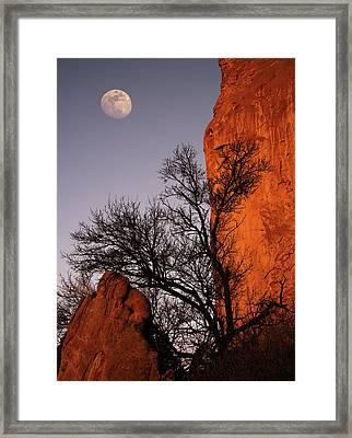 Garden Moon Framed Print